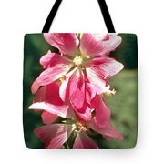 Kashmir Tree Mallow  Tote Bag