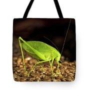 Katydid Close Up Bug Tote Bag