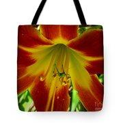 Katydid Surprise Tote Bag