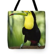 Keel Billed Toucan Calling Tote Bag