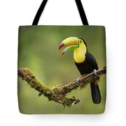 Keel Billed Toucan Perched On A Branch In The Rain Forest Tote Bag