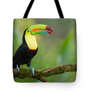 Keel Billed Toucan Perched On A Branch In The Rainforest Tote Bag