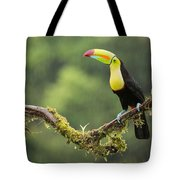 Keel-billed Toucan Perched Under The Rai Tote Bag