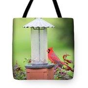 Kentucky Cardinal  Tote Bag