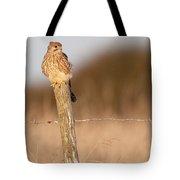 Kestrel In Evening Light Tote Bag