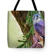 Kestrel On The Cones Tote Bag