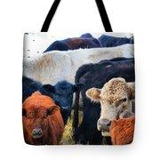Kibler Valley Cows Tote Bag