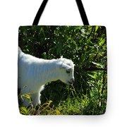 Kid Goat In Bushes Tote Bag