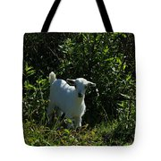 Kid Goat On A Farm Tote Bag