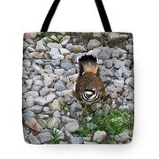 Kildeer And Eggs Tote Bag by Douglas Barnett