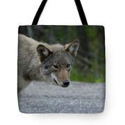 Killarney Coyote Tote Bag