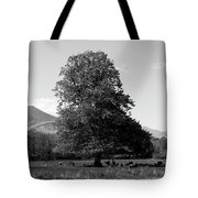 Killarney National Park, County Kerry, Ireland Tote Bag
