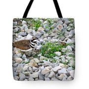 Killdeer 1 Tote Bag by Douglas Barnett