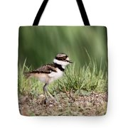 Killdeer - 24 Hours Old Tote Bag