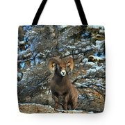 King Of The Canadian Rockies Tote Bag