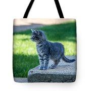 Kitten 1 Tote Bag