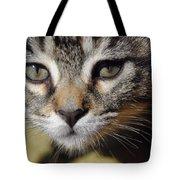 Kitten Curiosity Tote Bag