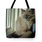 Kitten Daydreams Tote Bag