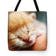 Kitten In Hand Tote Bag