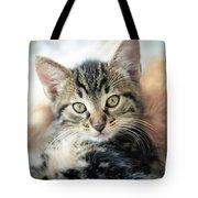 Kitten Looking Tote Bag