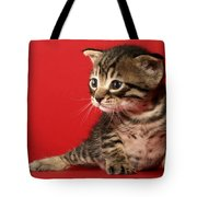 Kitten On Red Tote Bag