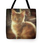 Kitten Portrait Tote Bag