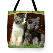 Kitten Smells Something Good Tote Bag