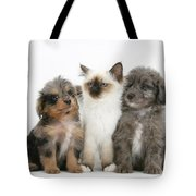 Kitten With Puppies Tote Bag