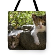 Kittens On A Wall Tote Bag