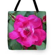 Knockout Rose Surrounded By Buds Tote Bag