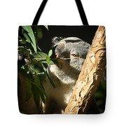 Koala Bear 3 Tote Bag