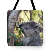 Koala Time Tote Bag