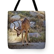 Kudu Near A Waterhole In Living Desert Zoo And Gardens In Palm Desert-california  Tote Bag