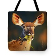 Kudu Portrait Eating Green Leaves Tote Bag