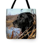 Labrador Retriever Waiting In Blind Tote Bag