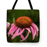 Lacewing On Echinacea Blossom Tote Bag