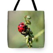 Lady Beetle Tote Bag