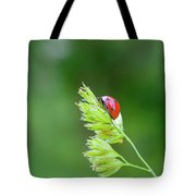 Lady Bird On A Herb Straw Close Up Tote Bag