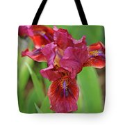 Lady In Red Iris Tote Bag