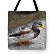 Lady Mallard Tote Bag