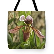 Lady Slipper 2 Tote Bag