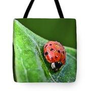 Ladybug With Dew Drops Tote Bag