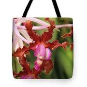 Laelia Undulata Orchid Tote Bag