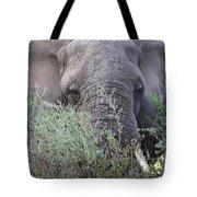 Lake Manyara Elephant Tote Bag