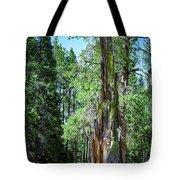 Lake Tahoe Tree Tote Bag