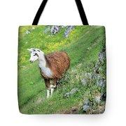Lama In Geiranger Tote Bag
