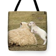 Lamb Jumping On Mom Tote Bag
