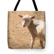 Lamb Looking Cute. Tote Bag