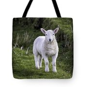 Lamb On The Isle Of Skye Tote Bag
