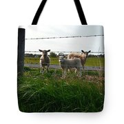Lambs Behind The Wire Tote Bag